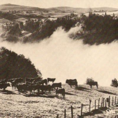 Le troupeau du brouillard