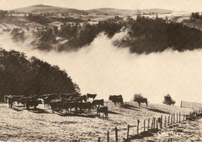 le-troupeau-du-brouillard-1.jpg